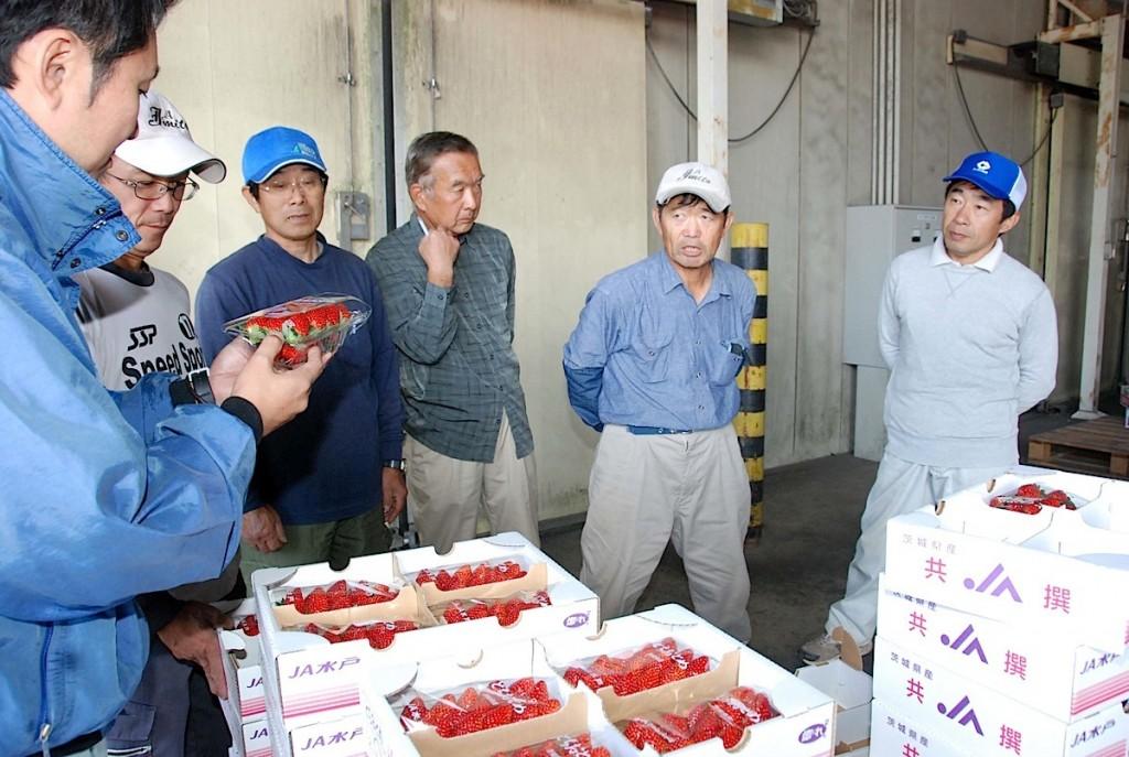 出荷されたイチゴを確認する関係者