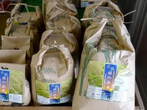 大洗の特栽米日の出米