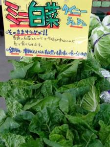 生でも食べられるミニ白菜