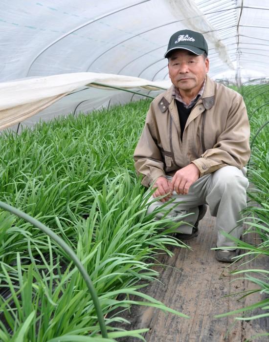 ニラ栽培を始めて約50年の山﨑さん