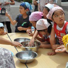 味噌汁に使用する煮干しの処理
